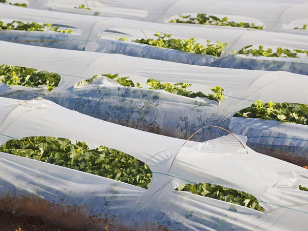 Eco-Agriculture Tarps
